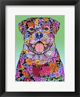Framed Flowers Rottweiler
