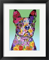 Framed Flowers Boston Terrier