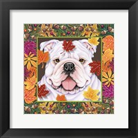 Framed Autumn Bulldog