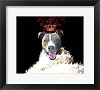 Framed Royal Love Pup - Pit Bull Terrier