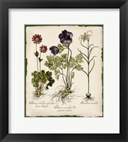 Framed Botanica Nostalgia II