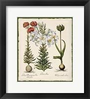 Framed Botanica Nostalgia III