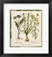Framed Botanica Nostalgia