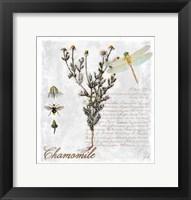 Framed Botanical Garden Chamomile Herb
