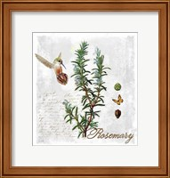 Framed Botanical Garden Rosemary Herb