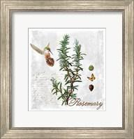 Framed Botanical Garden Rosemary Herb
