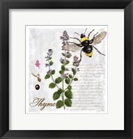 Framed Botanical Garden Thyme Herb
