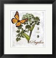 Framed Botanical Gardern Angelica Herb