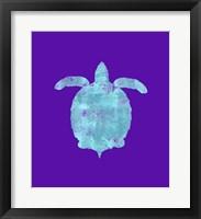 Framed Sponge Turtle Aqua