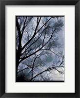 Framed Misty Tree