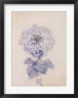Framed Chrysanthemum