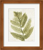 Framed Forest Ferns I Antique