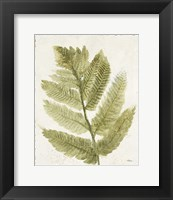 Framed Forest Ferns I Antique