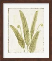 Framed Forest Ferns II v2 Antique