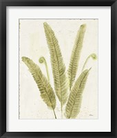 Framed Forest Ferns II v2 Antique