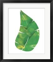 Framed Palm Leaf 6