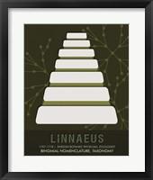 Framed Linnaeus