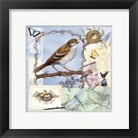 Framed Birds & Butterfly Sketches-Blue