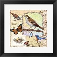 Framed Birds, Butterflys, Bees-Pastels