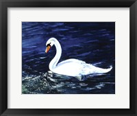 Framed Clearwater Swan