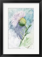 Framed Thistle Watercolor Sketch