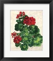 Framed Red Geranium