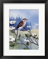 Framed Brown Thrasher