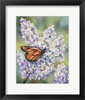 Framed Butterfly with Hydrangea