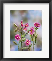 Framed Hummingbird with Dhalia