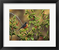 Framed Robin with Holly
