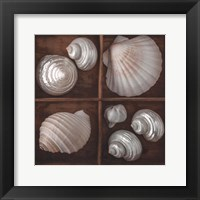 Framed Seashells Tresasures III