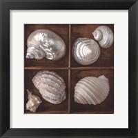 Framed Seashells Treasures II