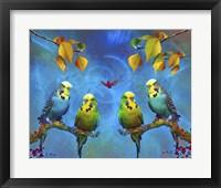 Framed Color Birds