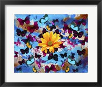 Framed Daisy And Butterflies