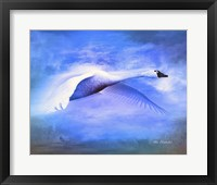 Framed Swan Fly