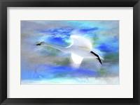Framed White Swan Fly