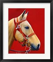 Framed Horse Portrait
