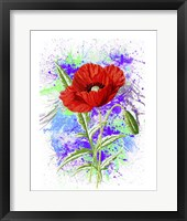 Framed Poppy Flowers