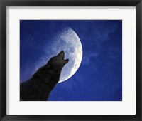 Framed Wolf Night