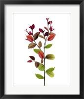 Framed Color Leaves