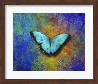 Framed Color and butterfly 1