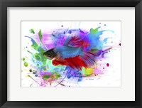 Framed Fish and colors