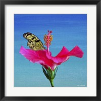 Framed Butterfly And Flower 3X