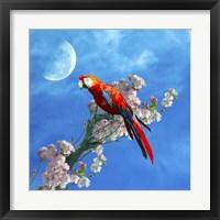 Framed Red Parrot