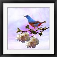 Framed Spring Bird 3B
