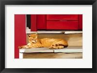 Framed Cat 2A