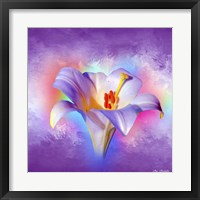 Framed Flower On Colors 2