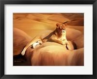 Framed Lioness On A Rock 2