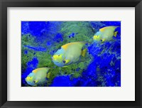 Framed Fish Art 1