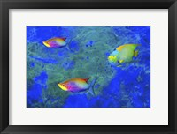 Framed Fish Art 2